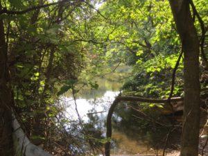 ポイント開拓 野池
